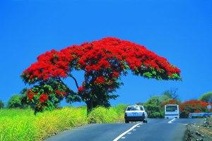 Mauritius-Island_3B8-F1BCS_DX-News
